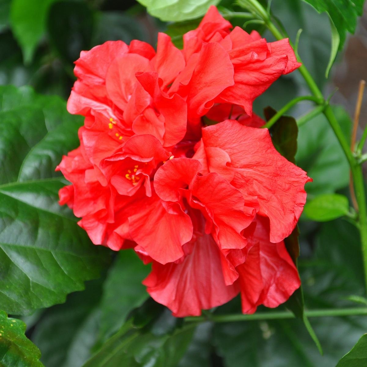 L 39 oasis de l 39 anse bleue le jardin for Site de fleurs