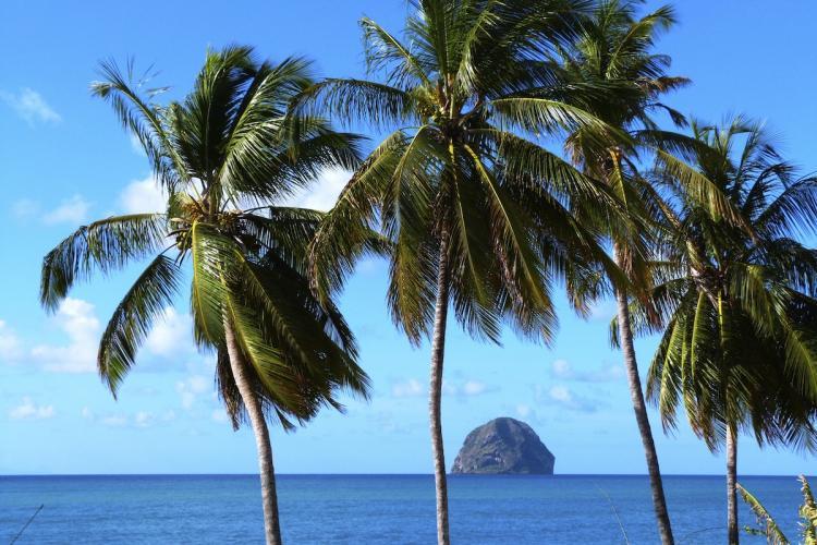 Les cocotiers, la plage à 100 mètres de la résidence L'Oasis de L'Anse bleue