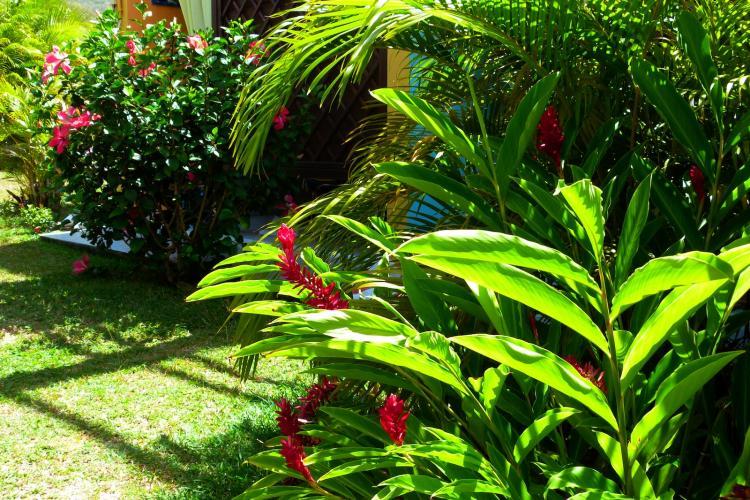 Hibiscus, multipliant et alpinia se cotoyent au pied de votre appartement