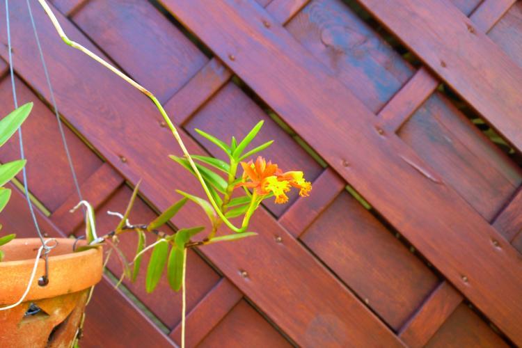 Une orchidée, elle aime être bichonnée par les vacanciers