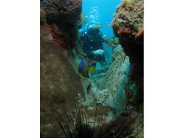 Des pissons tropicaux des tortues, n'hésitez pas venez plonger en Martinique.