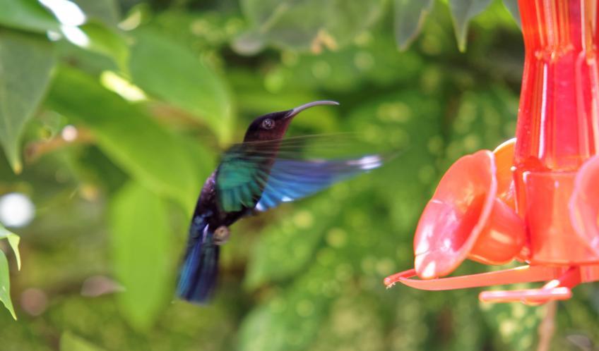 Un colibri devant l'appartement.
