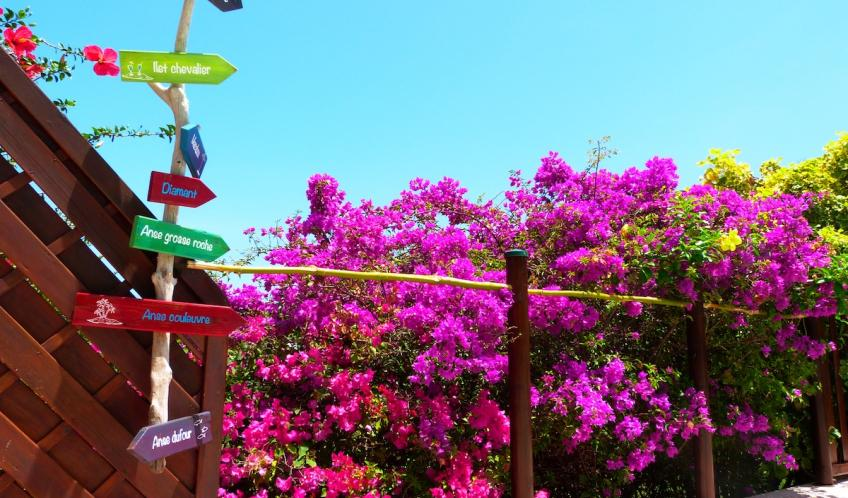 Des fleurs autour de la piscine.