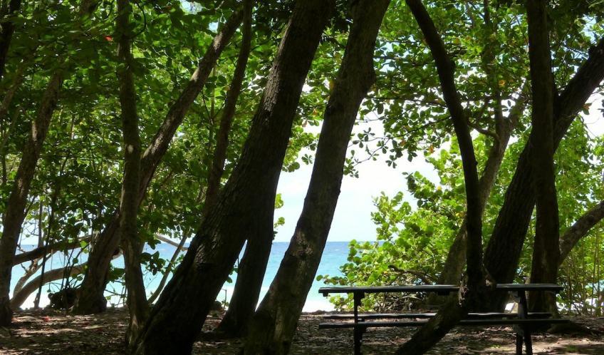 Dans la forêt bordant la plage, les espaces sont nombreux pour déjeuner en famille ou entre amis.