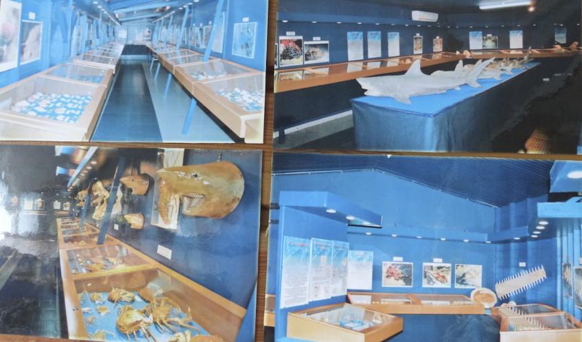 Voici la boutique, le musée du coquillage se trouve juste derrière.